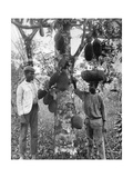 Jackfruit, Jamaica, C1905 Giclee Print by Adolphe & Son Duperly