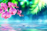 Orchid in Zen Garden with Droplet on Pond Papier Photo par Romolo Tavani