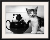 Pinkie the Guinea Pig and Perky the Kitten Tottenahm London, September 1978 Framed Photographic Print