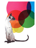 Siamese Cat With Colorful Balls Posters by  Roccocola