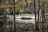 Wooden Bridge in Swamp of Charleston, SC Posters