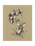 Botanical Sketch Black and White V Print by Ethan Harper