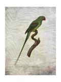 Parrot Jungle III Arte di John Butler