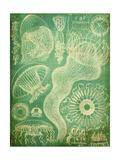 Sealife I Kunst af John Butler