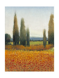 Cypress Trees II Posters by Tim O'toole