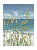 Summer Breeze II Prints by Tim O'toole