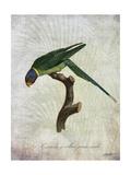 Parrot Jungle IV Poster di John Butler