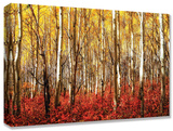 Aspen Grove Red Stretched Canvas Print
