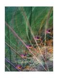Wetland Vector II Posters by James Burghardt