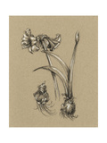 Botanical Sketch Black and White IV Prints by Ethan Harper