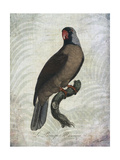Parrot Jungle I Stampe di John Butler