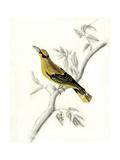 Rustic Aviary II Premium Giclee Print by Naomi McCavitt