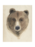 Watercolor Animal Study VI Premium Giclee Print by Grace Popp