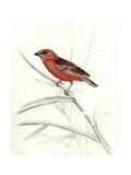 Rustic Aviary IV Premium Giclee Print by Naomi McCavitt