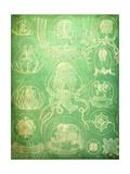 Sealife IV Poster af John Butler