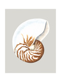 Nautilus Premium Giclee Print by Michael Willett