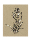 Botanical Sketch Black and White VI Prints by Ethan Harper