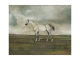 A Grey Hunter in a Landscape Premium Giclee Print by Naomi McCavitt