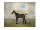 The Prince Rohan's Favorite Hunter Premium Giclee Print by Naomi McCavitt