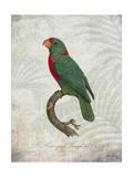 Parrot Jungle VI Poster af John Butler