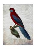 Parrot Jungle II Posters af John Butler