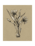 Botanical Sketch Black and White III Posters by Ethan Harper