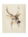 Watercolor Animal Study IV Plakater af Grace Popp