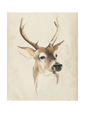 Watercolor Animal Study IV Premium Giclee Print by Grace Popp