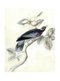Rustic Aviary I Premium Giclee Print by Naomi McCavitt