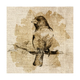 Bird Study IV Premium Giclee Print by Lanie Loreth