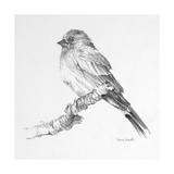 Bird Drawing I Premium Giclee Print by Lanie Loreth