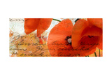 Poppies Composition III Premium Giclee Print by Patricia Quintero-Pinto