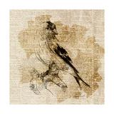 Bird Study III Premium Giclee Print by Lanie Loreth