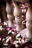 Magnolia Petals on Stairway Photographic Print by  EvanTravels