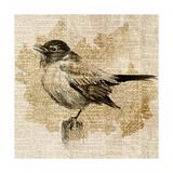 Bird Study II Premium Giclee Print by Lanie Loreth