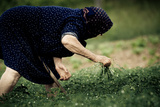 Old Woman Farming in Greece Photographic Print by  EvanTravels