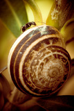 Ant on Snail Shell Photographic Print by  EvanTravels