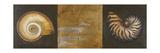 Seashells I Giclée-Premiumdruck von Patricia Quintero-Pinto