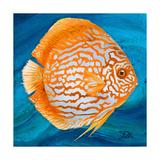 Aquatic Life I (Vibrant Sea Life II) Premium Giclee Print by Patricia Quintero-Pinto