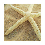 Starfish Premium Giclee Print by Lisa Hill Saghini
