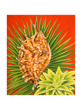 Island Treasures I Prints by Linda Baliko