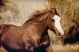 Running Horse Photographic Print by Carol Walker