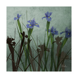Blue Irises I Giclée-Druck von Patricia Pinto