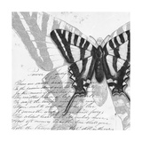 Butterflies Studies II Premium Giclee Print by Patricia Quintero-Pinto