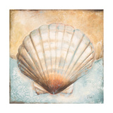Seashell Collection III Premium Giclee Print by Patricia Quintero-Pinto