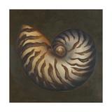 Seashell II Giclee Print by Patricia Pinto