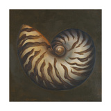 Seashell II Premium Giclee Print by Patricia Quintero-Pinto