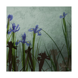 Blue Irises II Giclee Print by Patricia Pinto