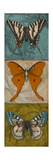 Blue Wings I Premium Giclee Print by Patricia Quintero-Pinto