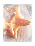 Conch II Premium Giclee Print by Lisa Hill Saghini